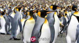 vie des pingouins