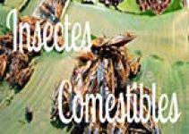 manger des insectes comestibles